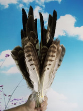 New! free shipping, sales of high-quality eagle bird feathers