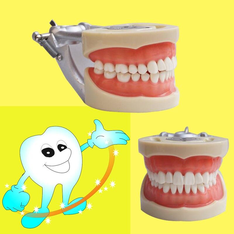 Darmowa wysyłka zęby model nauczania Dental miękkie dziąsła 200 typu H zdejmowane zęby w Wybielanie zębów od Uroda i zdrowie na  Grupa 2