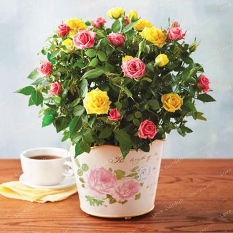 100 PcsBag Mini Rose Bonsai Miniature Rose Seeds DIY Home