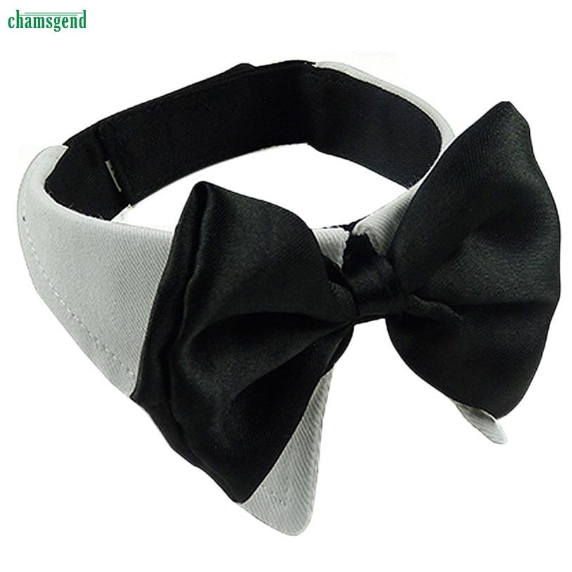 Tamaño m mariposa encantadora pet chamsgend y cat collar de perro corbata pet pr