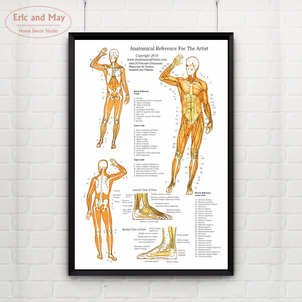 The Muscular Body System Canvas Art Print Painting Poster Wall Pictures For Room Decoration Home Decor No Frame Painting Calligraphy Aliexpress