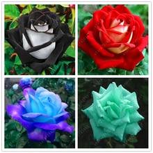 200 pcs/bag rose seeds, perennial plant flower seeds rare sundry petals for home garden bonsai pot black easy to grow
