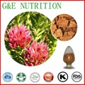 Details about 500g Golden Root/Hong Jing Tian/Rhodiola Rosea Extract Powder, High Quality