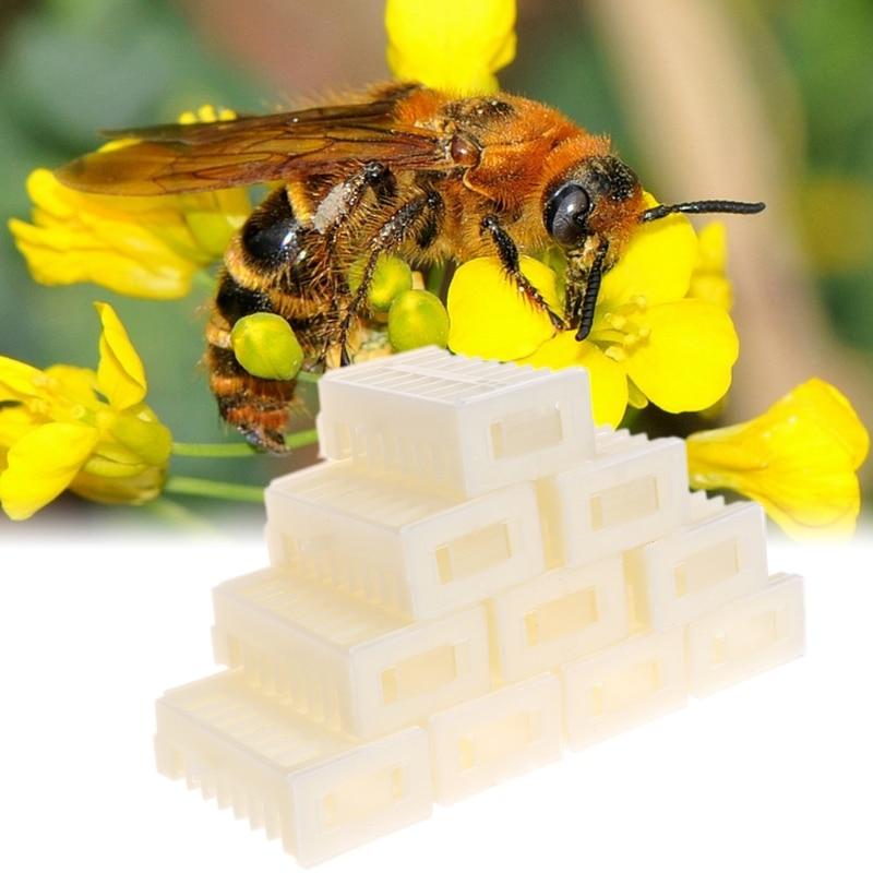 10Pcs Bee Cages Plastic Multi Function Beekeeping Rearing Tools King Beekeeper