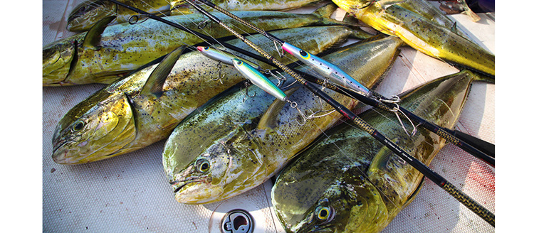 China lure set Suppliers