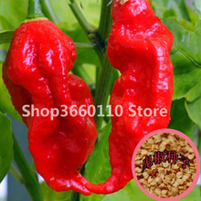 100Pcs Devil Chilli Bonsa Diy Potted Plants Germination Rate Of 95% India Pepper Free Shipping Best Vegetables Garden Plant Home стоимость