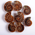 (50 Pairs/lot) Ancient Natural Ammonite Fossil Stone Opened Ammonite pieces for Jewelry Making Bulk Wholesale