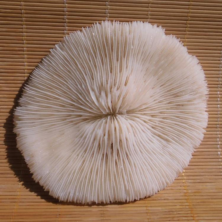9 64 5 De Reduction Happykiss 2 Pieces Naturel Blanc Corail Rond Champignon Corail Mer Chrysantheme Aquarium Poissons Reservoir Decoration