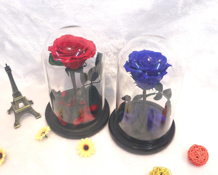 19e6ecbc191 O Pequeno Príncipe Tampa De Vidro Rosa Preservada Flor Imortal Rosas ...