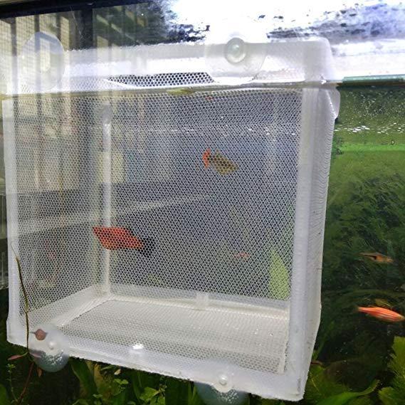 Pecera de acuario caja de cría red incubadora trampa de freír flotador Caja de aislamiento Casa de bebé recién nacido