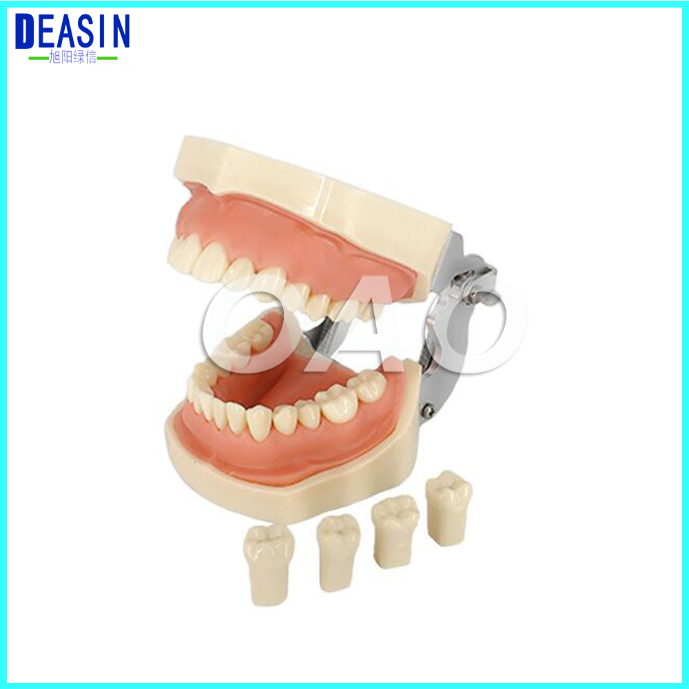 New Dental 28 pcs Teeth Model for Dental Practice use Dental All Removable Teeth Model dental manikin dental typodont model dental orthodontic model for training practice with wax teeth model and occluder