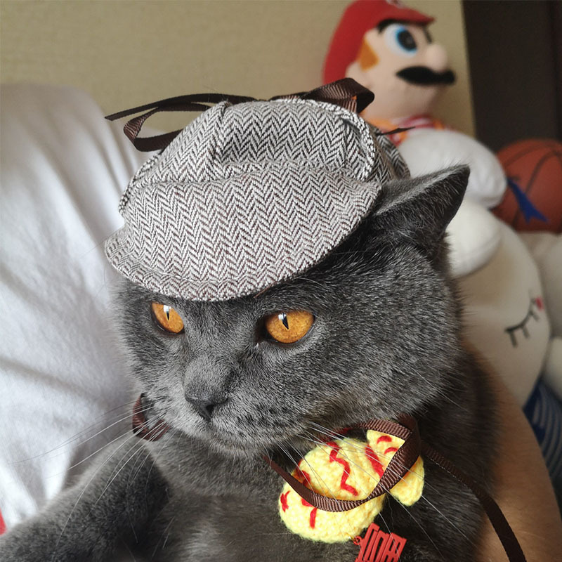 detective hat for dogs