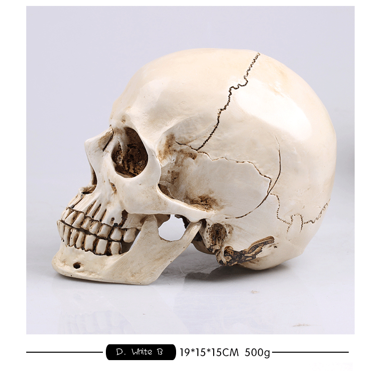 13669 CMAM Art Skull Anatomy Model, Natural Size Skull for Drawing Teaching, Resin Made Skull цена
