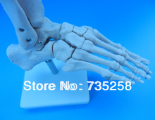 Life-Size Foot Joint,Natural Feet Joint Simulation Model,Foot Joint Model