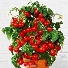 Fresh Bonsai Tomato seeds Mini Cherry Potted Sweet Fruit Vegetable Organic -100 pcs/lot
