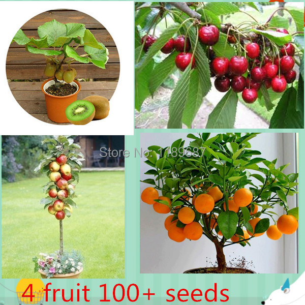4 kind fruit , bonsai fruit tree seeds , vegetable and fruit seeds total 100+ seeds