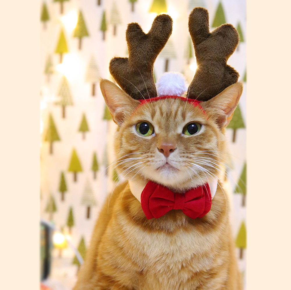 Christmas Elk Headband For Cats Hair Decorations For Dogs Cat Accessories Halloween Pet Supplies Funny Photos Props