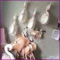 Nova Chegada 3D Decoração Da Casa Quarto Cisne Animais Brinquedos Boneca Cabide Decoração 42 cm * 19 cm Cisne Decorações para casamentos Presentes de Aniversário