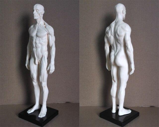 Aliexpress.com: Comprar 1:6 30 cm esqueleto humano anatómico modelo ...