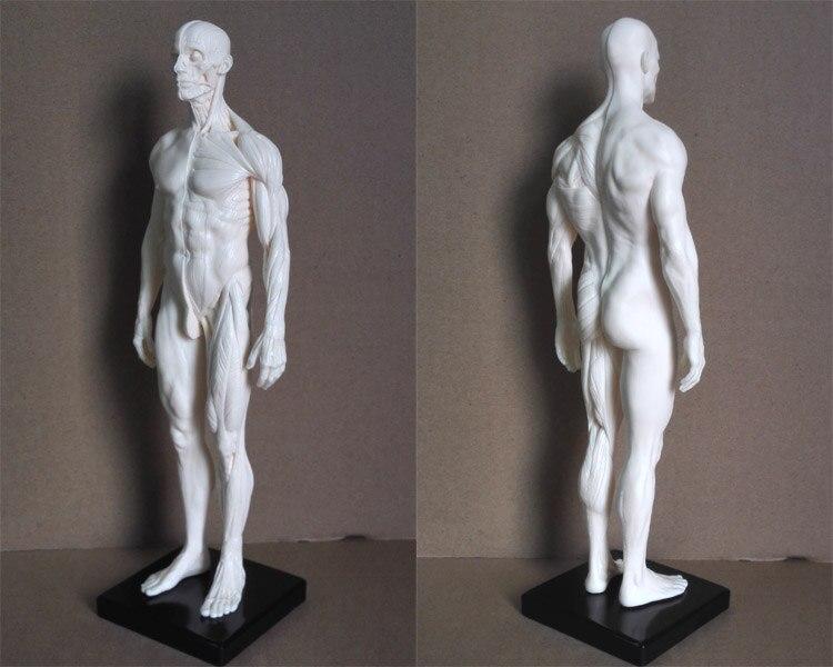popular human skeleton sale-buy cheap human skeleton sale lots, Skeleton