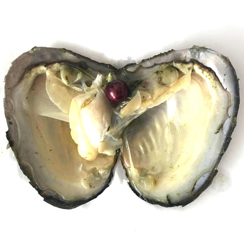20pcs Single Wine 9-10mm Near Round Edison Pearl with Vacuum Packed Oyster Fresh Pearl in Oyster