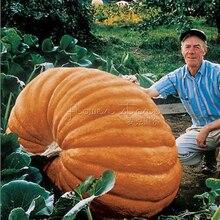 20 Giant pumpkin Seeds of  Vegetables For Halloween Vine Heirloom Garden Delicious  food