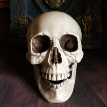 Plastic Skeleton Head Halloween Decor Prop Human Skull Decoration Bones Statue Horror Tamper Toys Bar Ghost House Art Props