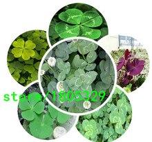 New Arrival Home Garden Plant 100Seeds Trifolium Repens White Dutch Clover Seeds Four Leaf Clover Seeds