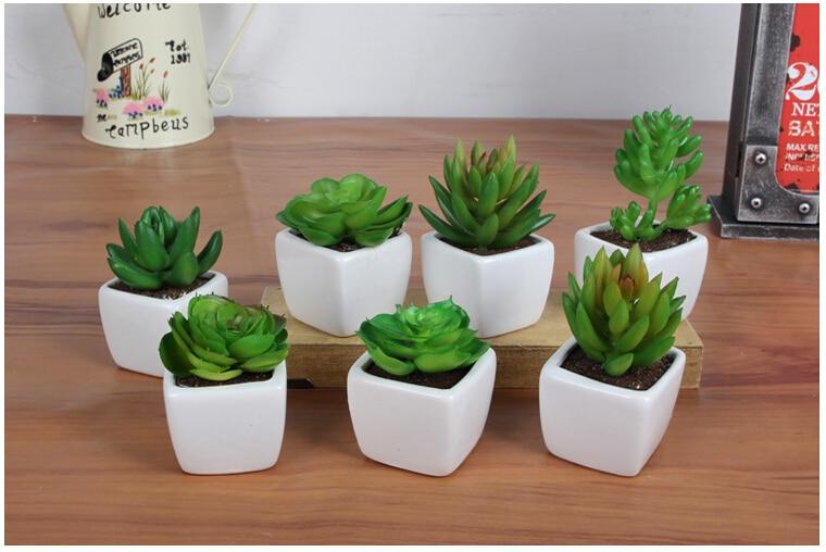 Hogar agradable actividades decorativas plantas suculentas for Plantas decorativas ornamentales