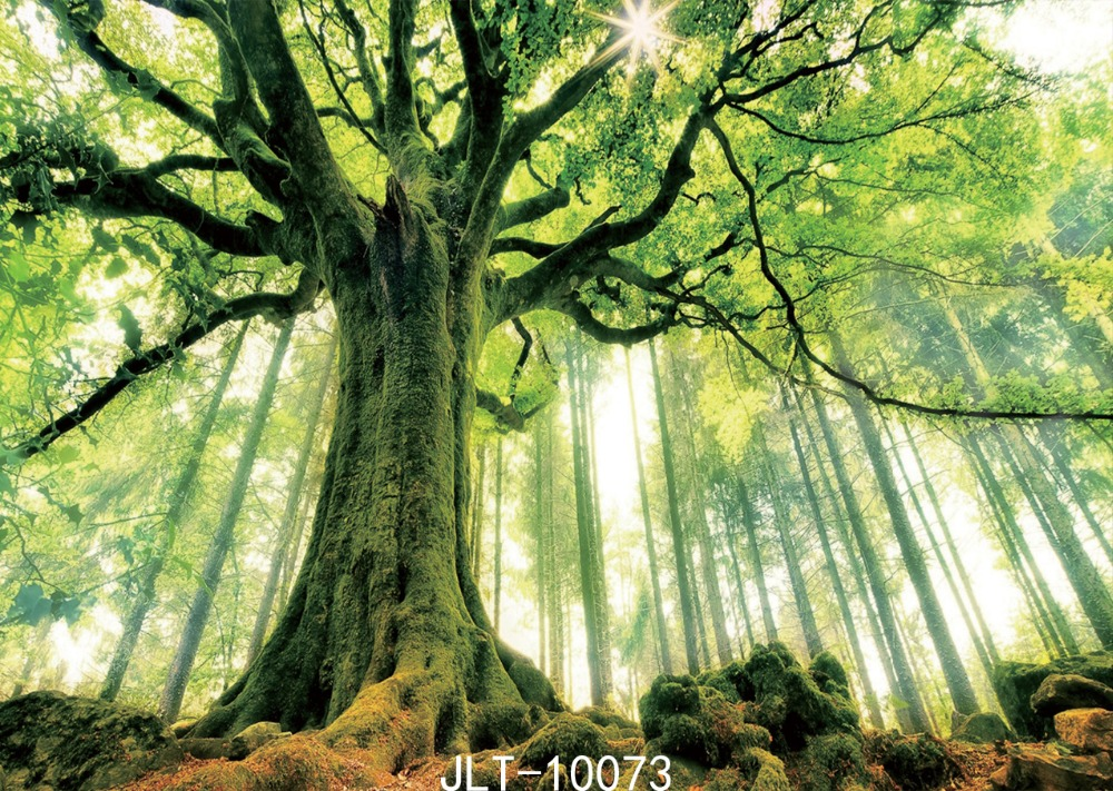 SJOLOON summer theme forest photography background natural wedding photography backdrops for photography-studio 7x5ft thin vinyl disney софия