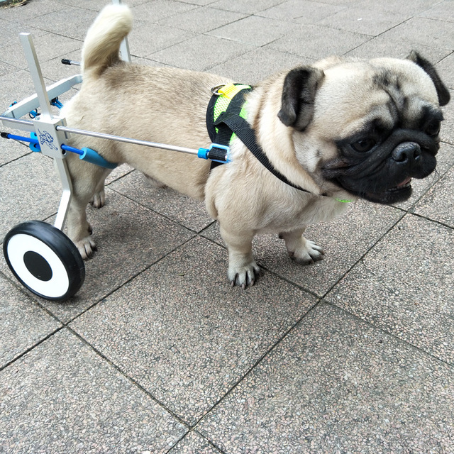 Wheelchair Dog Grey Dining Table And Chairs Ultra Light Adjustable Aluminum Alloy Paralyzed Pet Scooter Free Installation Disabled Assistant