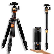 Wholesale Qingzhuangshidai Q555 portable aluminium monopod stand traveling professional camera tripods for slr video tripod