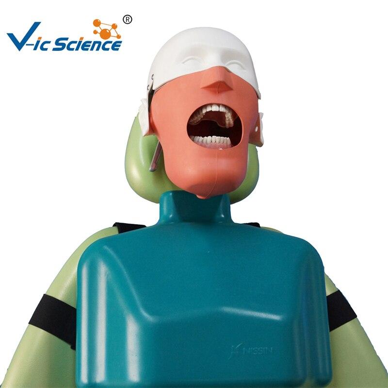 Nissin Head Dental Model Senior Manikin With TorsoNissin Head Dental Model Senior Manikin With Torso