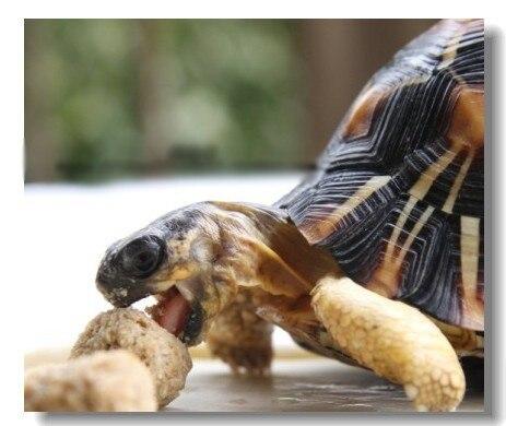 wholesale tortoises feed food turtle food nutrition feed 500gram cheap bulk sale in Feeding Watering Supplies from Home Garden