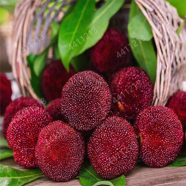 5 قطعة/الحزمة نبات الفراولة الفاكهة حديقة سهلة النمو لذيذ arbutus يانغ مي شجرة لحديقة المنزل