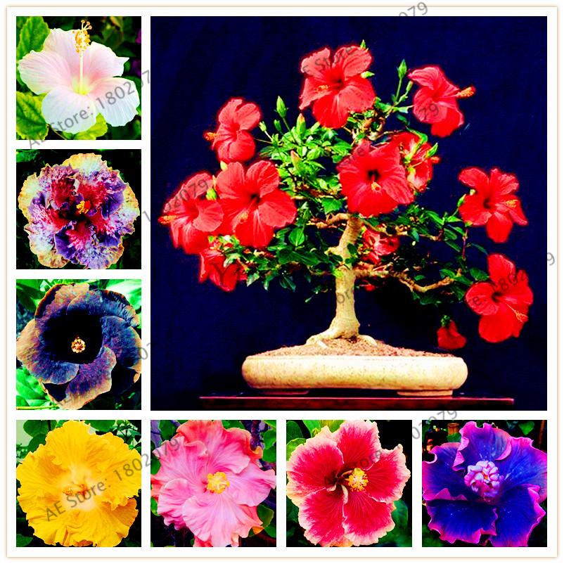 obtenir en ligne à bon marché jardin fleurs vivaces -aliexpress