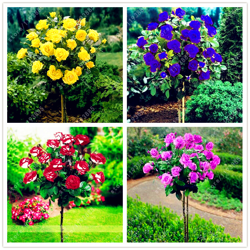 Online buy wholesale large decorative flower pots from for Decorative plants for garden