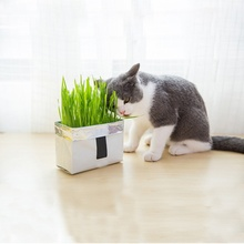 N Cat Grass Soilless Culture Kit- Seeds And Flowerpot Pet Soilless Cultivation Cat Grass To Hair Ball To Help Digest Cat Stomach