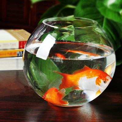 fish pot aquarium 1000 aquarium ideas. Black Bedroom Furniture Sets. Home Design Ideas