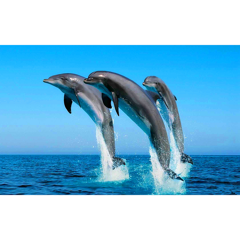 Обои На Рабочий Стол Дельфины