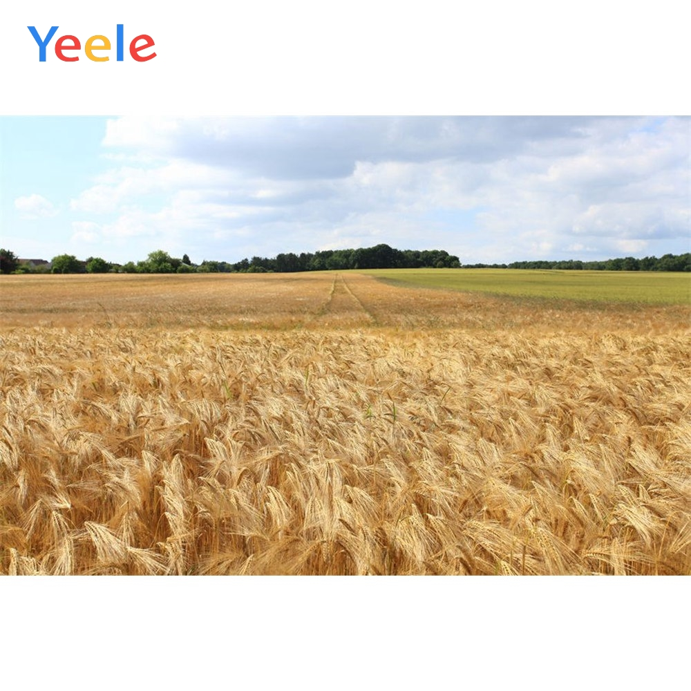 Yeele Vinyl Autumn Harvest Wheat Fields Haystack Scenenry Photography Background Customized Photocall Backdrop For Photo Studio in Background from Consumer Electronics