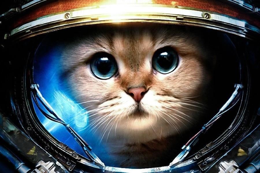 raynor astronaut space cat humor animal game poster print silk fabric art wall decor 12x18 inch