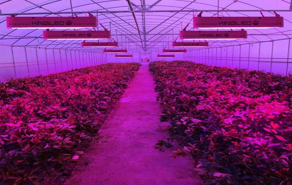 Светодиодный светать полный спектр Kingled 2000 Вт для комнатных растений Фито лампа для растения парниковые growbox для выращивания овощей, цветущих растений seedings