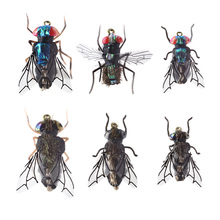 Trout Fly Fishing Lure set 12pcs Mosquito Housefly Dry Flies Artificial Realistic Emerger Caddis Adams Kit Rainbow flyfishing