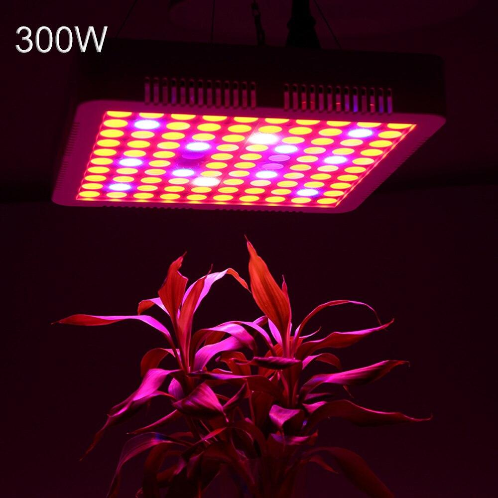 LED de lampe Phyto 300 W élèvent le spectre complet léger pour la serre d'intérieur élèvent des plantes de tente se développent lumière LED