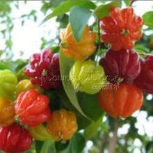 20 Scotch Bonnet Habanero Pepper Seeds ~vegetable