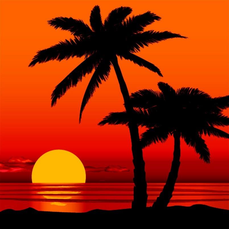 Palm Tree Beach: Beach Seaside Summer Holidays Ocean Sunset Palm Tree