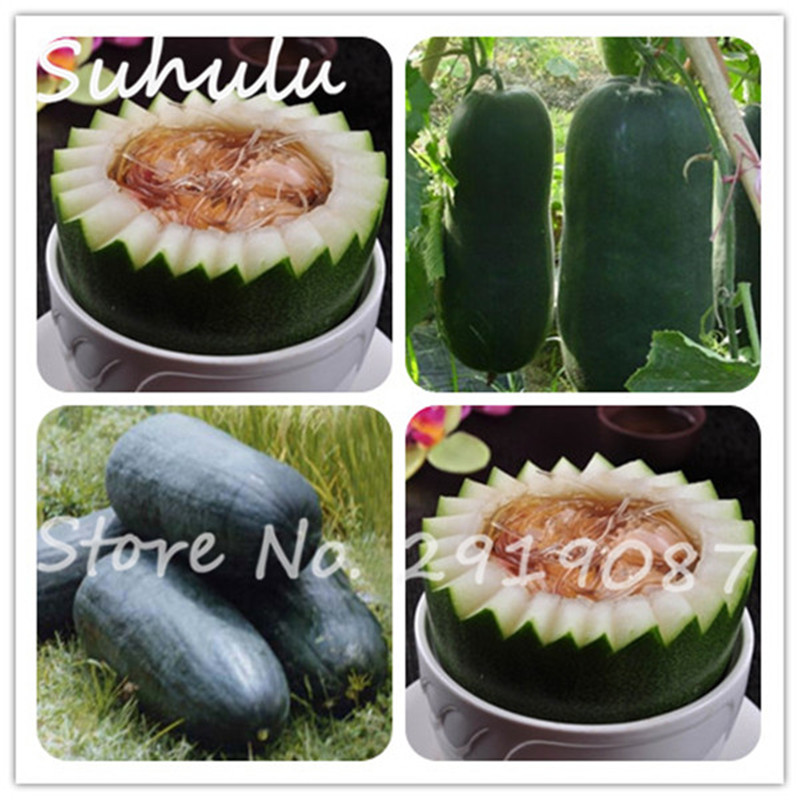 Rare White Wax Gourd Summer Best Vegetable Seeds 10 Seeds Semenatsvety  Vegetables For Home Garden Plants High Nutrition
