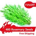 400 Розмарин Семена DIY Сад Завод Легко Выращивать Травы, семена овощных культур здоровый,