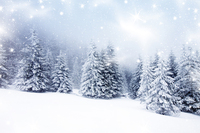 horizontal christmas decorations for home photography backdrops christmas background photo background xt 3968